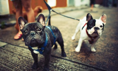 Is a Pet Business Startup Right for You?